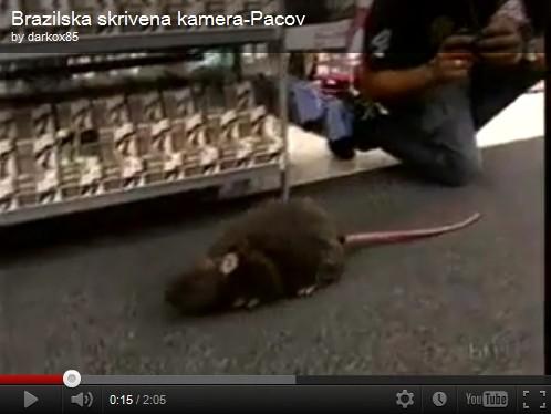 Bromas en los vestidores socorro una rata los mejores videos de humor - Camara oculta en vestidores ...